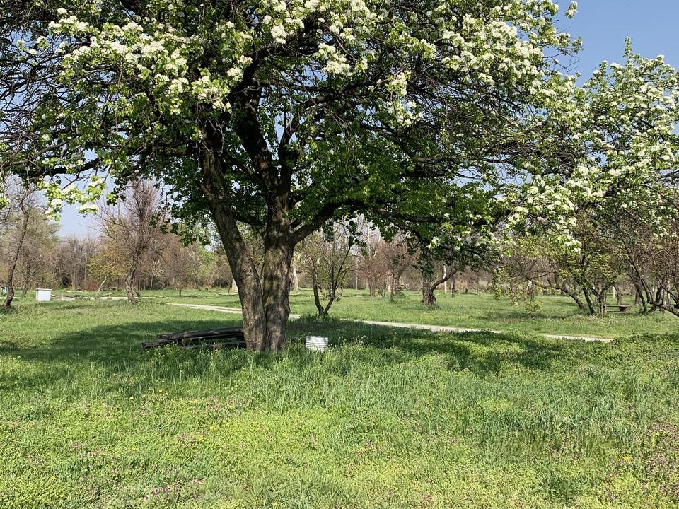 """Цветущие деревья в парке """"Новоселица"""""""